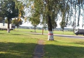 В Лиде в мкр. Слобода замечены «БЧБ-деревья»