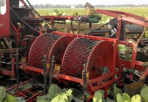 В Лиде создали первый белорусский капустоуборочный комбайн