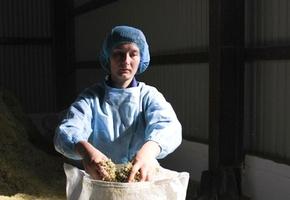 Как в Можейково выращивают ромашки и валериану