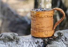 В лесхозах региона приступили к заготовке берёзового сока
