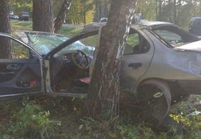 Под Лидой Ford съехал в кювет и врезался в дерево