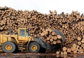 Деревообрабатывающий завод с полным циклом могут построить в Лидском районе