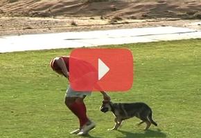 Видеофакт. Четвероногий болельщик показал футболистам, в какие ворота нужно забивать мяч