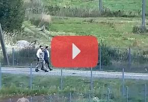 Камера в п/п Геранёны зафиксировала нарушение литовско-белорусской границы в присутствии литовского пограничника