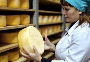 Россельхоснадзор вернул 18 тонн белорусского «сыра из будущего»