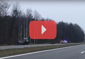 На трассе М6 «Минск — Гродно» перед Renault Clio выскочил лось. Животное погибло на месте ДТП