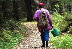Пенсионера-грибника 4 дня искали в лесу под Лидой и нашли в болоте