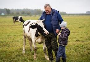 Как чиновник на пенсии создал ферму под Лидой и продает «молочку» на 1000 рублей в день