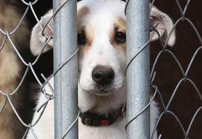 В Лидском районе гражданин кинул в пса топор