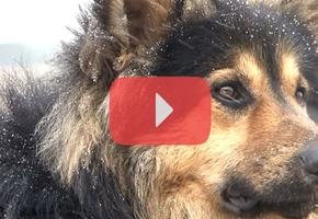 История пса-«реаниматолога» из Лиды закончилась хеппи-эндом. Его устроили на работу в Гродно