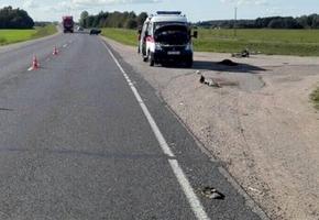 Лидском районе насмерть сбили велосипедиста