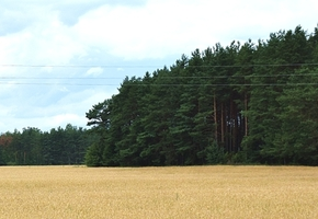В Лидском районе снят запрет на посещение леса