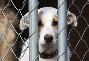 В Лиде живодеры повесили двух собак