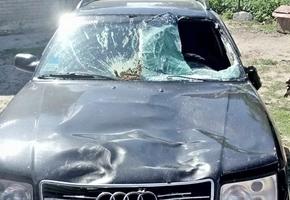 На трассе М6 лось выпрыгнул на автомобиль. Автовладелец остался один на один со своими проблемами