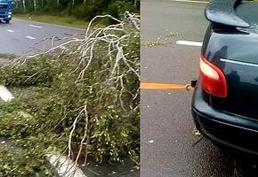 На трассу М6 рухнуло дерево. «Пять секунд отделяли нас от трагедии»