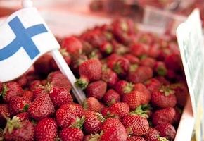 Работа в Финляндии. «Пахать приходится капитально, но заработок хороший»