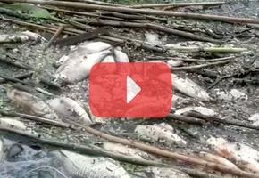 Видеофакты экологического бедствия в Лидском районе