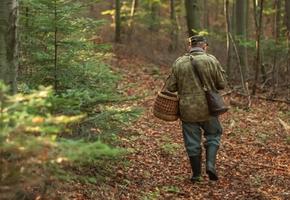 В Лиде разыскивают мужчину, который неделю назад ушел в лес и не вернулся