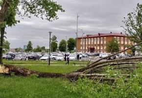 В Лиде из-за порывов ветра пострадали деревья