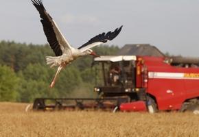 В Лидском районе у бригадира с/х предприятия на даче нашли 1340 кг зерна