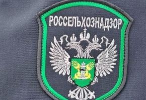 Россельхознадзор: российские компании несколько раз по нелегальной схеме перерабатывали масло, указанное как лидское