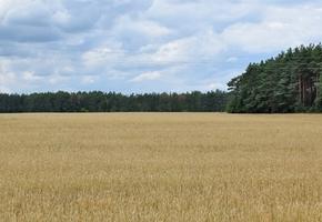 В Лидском районе введено ограничение на посещение лесов