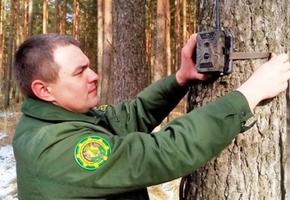 Под Лидой с дерева неизвестные украли камеру фотовидеофиксации