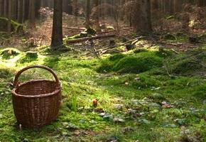 Лидчанин нашёл в лесу огромный подберёзовик