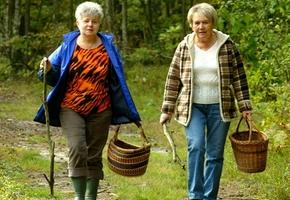 Ещё один грибник-пенсионер угодил в болото под Лидой