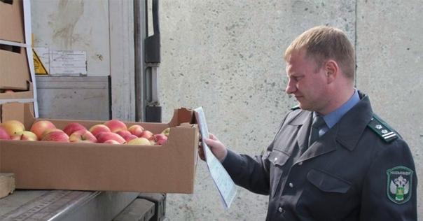 Молочку и лидские яблоки запретили к ввозу в РФ