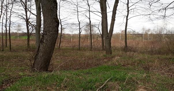 В Гродненской области выявили более 1000 га неэффективно используемых сельхозземель